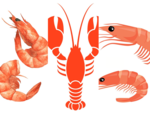 Lobster, Shrimp, Prawns- What's the difference