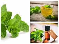 Do you know the difference between peppermint and spearmint?