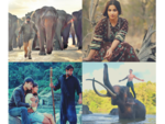 When Bollywood films showed the man-animal conflict