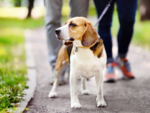 Important reasons why you need to walk your dog now