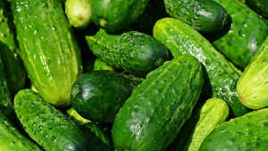 Watch: Why you must eat a cucumber daily