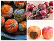 COVID-19: Can you get black fungus infection from raw fruits?
