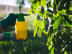 Using pesticides on the wrong day