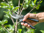 Not pruning your plants