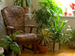 Provide a biophilic touch