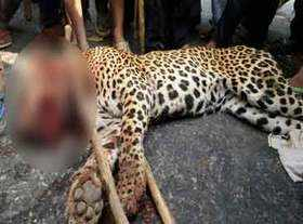 The Leopard Was Mysteriously Found Dead In Foothills Of Aravalli Gurugram On Friday