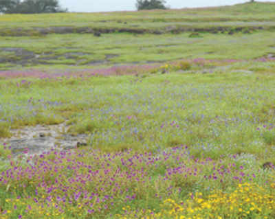 Govt may be dam-ning biodiversity