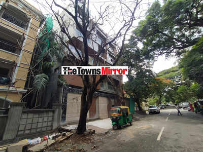 The Towns Mirror Special: It's not the tree that's shady here