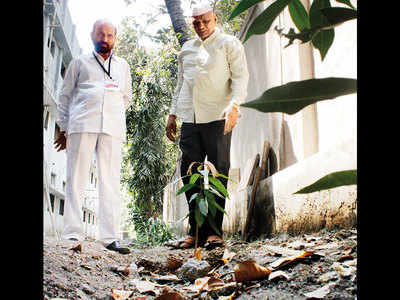 To make up for 1 axing, 64-yr-old man plants 75 new trees