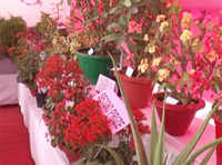 Assam: 28th annual horticultural show held to encourage farmers