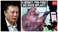 Watch Elon Musk's Monkey play Ping-Pong using brain implants