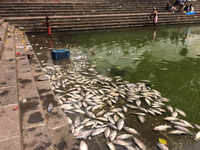 Mumbai: Increased toxicity of water, post-Pitru Paksha rituals, causes death of hundreds of fish