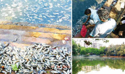 Pollution kills thousands of fish in Dahisar pond