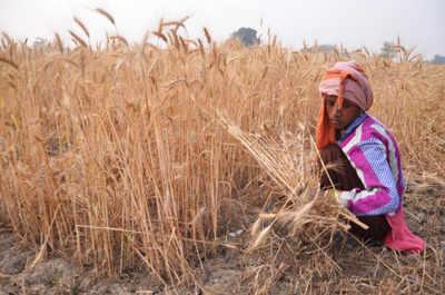 Gujarat: Bhartiya Kisan Sangh's PIL challenges mandatory crop insurance