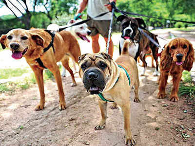 A licence to pet? Bring it on, says Bengaluru