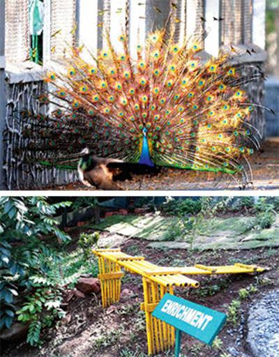 Raj Bhavan peacocks find savior in Tata Trust