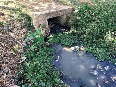 Madiwala Lake is toxic again