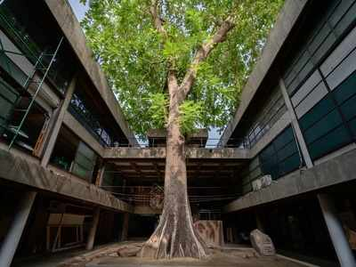 Tree lovers begin project to map trees in Ahmedabad