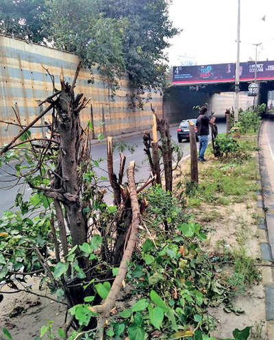 30 trees on Outer Ring Road cut for hoarding view?