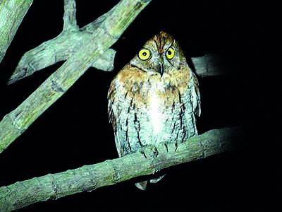 Karnataka: Why owls are in great demand