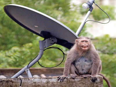 Local cable TV operators fail to fill in the blanks