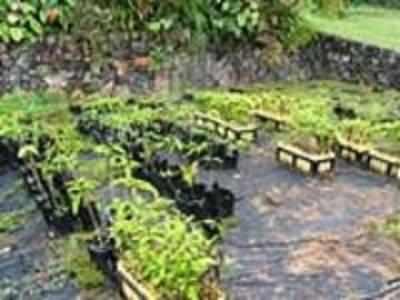 Clean and Green Mumbai