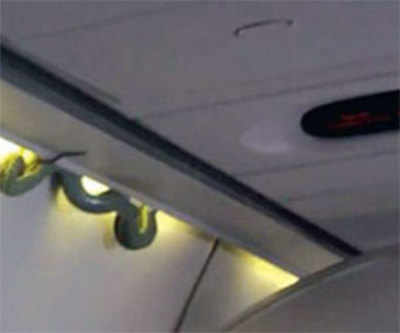 Snake slithers out of luggage bin on Mexico plane