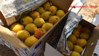 Delhi: Crowd loot mangoes worth thousands in Jagatpuri