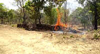 Maharashtra: Maoists set forest depot on fire in Gadchiroli