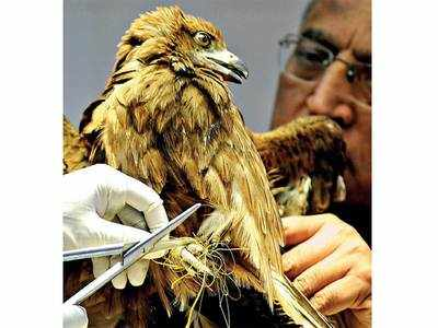 Strict protocols deter NGOs from rescuing birds this Uttarayan