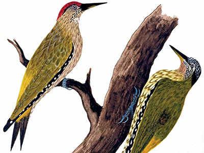FLOCK MUSIC: Birdwatching world's women high-fliers