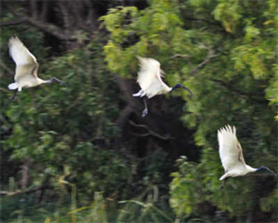 Which other city can boast of a 37-acre bird sanctuary?