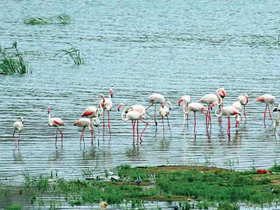 Winged visitors at Sabarmati