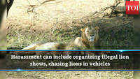 Gujarat: Those harassing lions can be jailed up to 7 years