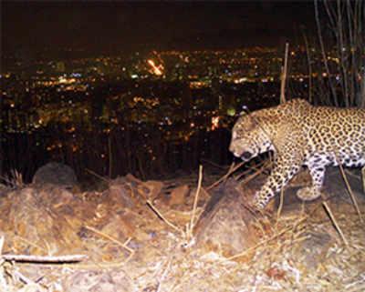 Mumbai's wild nightlife