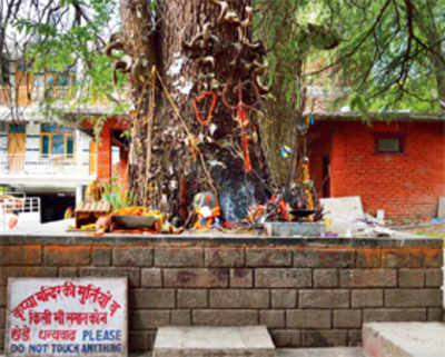 Pilgrim Nation: The Roadside Shrine