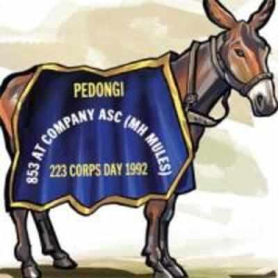 Army mule that earned name kickass