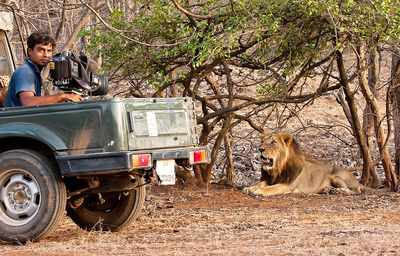 Gujarat: PIL objects to desiltation in lions' territory in Gir national park