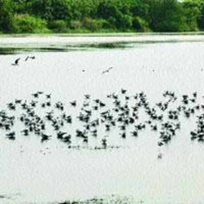 Local environmentalists protest debris dumping near '˜DPS' lake, plan to file PIL