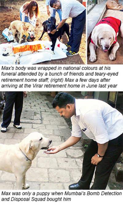 26/11 hero police dog dies at Virar retirement home