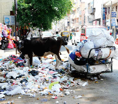 Yet another HC bench tackles garbage crisis
