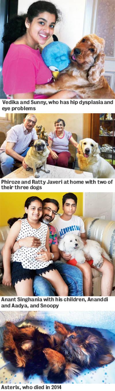 Special Investigative Report: Peddling pedigree