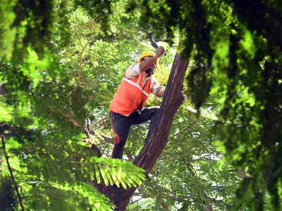 BMC to clear 1,961 trees