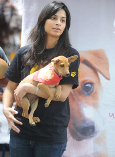 Dog-loving city euthanised 53,254 canines in 14 years