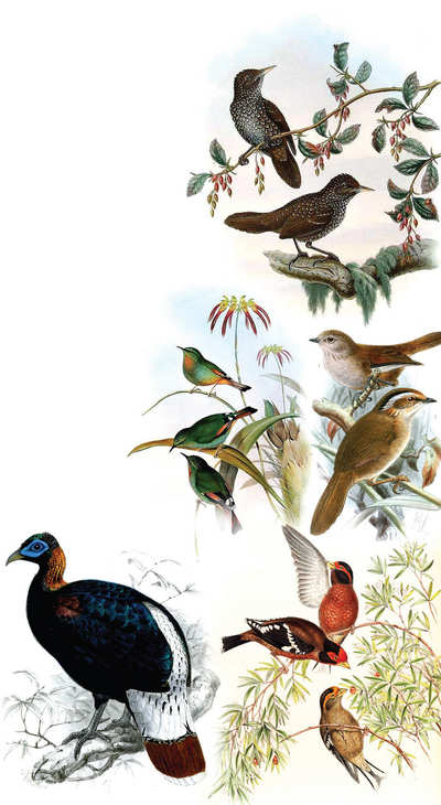 Flock Music: Fifty birds to see before you die #10