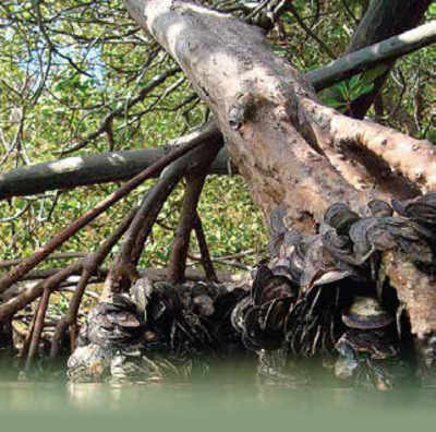 Bringing mangroves to the masses in Mumbai