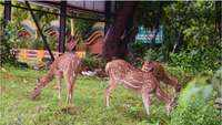 Deers spotted on NH-16 in Visakhapatnam