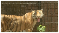 Vadodara zoo sprays water around animal cages to beat the heat