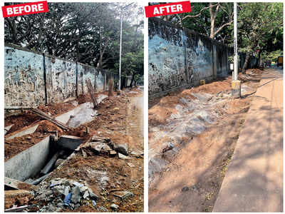 Saplings sacrifice their lives to road widening