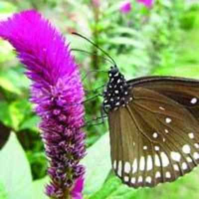 Butterfly park planned at Vashi